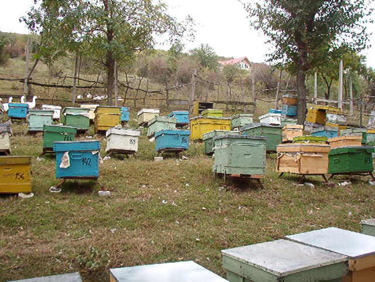 Legea apiculturii contestată vehement