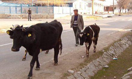 Norme de venit pentru agricultură