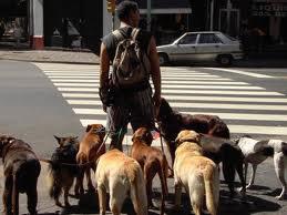 Amenzi pentru tulcenii care nu-și înregistrează câinele