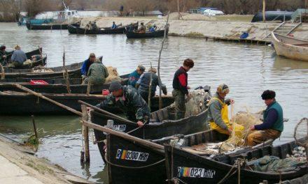 Despre valabilitatea permiselor de pescuit comercial
