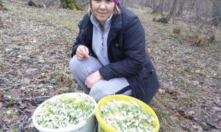 """Afacerea """"Ghiocelul"""" înfloreşte la Slava Cercheză"""