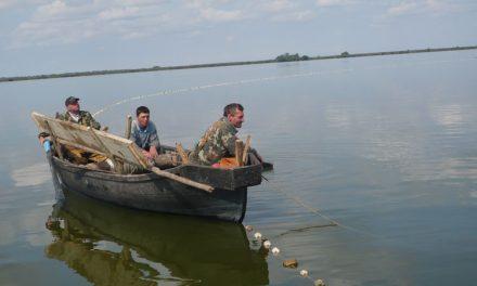Belacurencu sare în ajutorul producătorilor de peşte de la Sulina