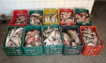 Șase centre de primă vânzare a peştelui, autorizate pentru funcţionare