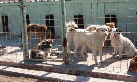 Un asistat de la Cantina de Ajutor Social are o alocaţie de hrană mai mică decât a unui câine comunitar