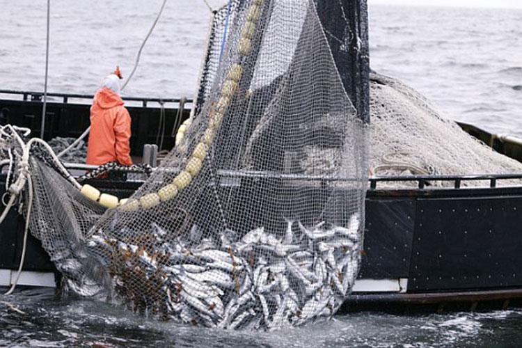 Pescarii cu permise de pescuit la Marea Neagră, discriminaţi de noul ordin de prohibiţie