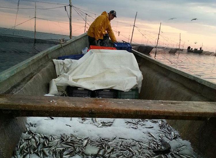 ANPA ne-a luat licenţele de pescuit şi le-a dat băieţilor deştepţi de la Constanţa