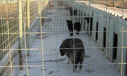 Maidanezii tulceni sunt sortiţi eutanasierii
