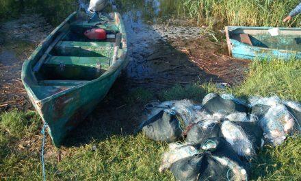 Piaţa neagră a pierdut o jumătate de tonă de peşte
