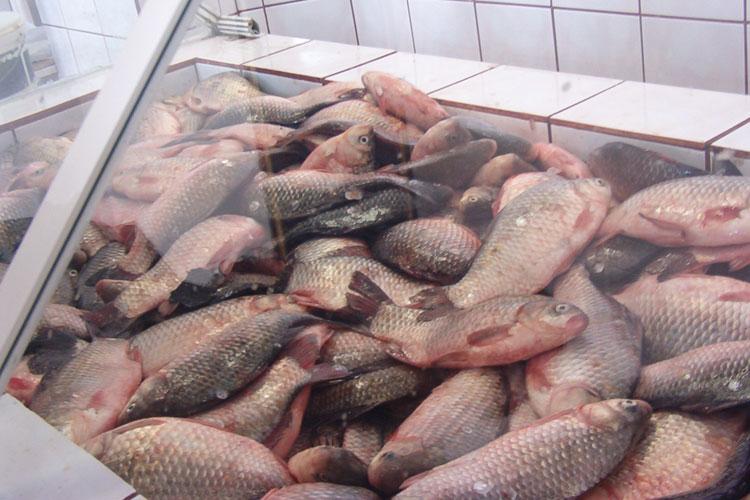 Piaţa peştelui din deltă, sufocată de concurenţa din UE