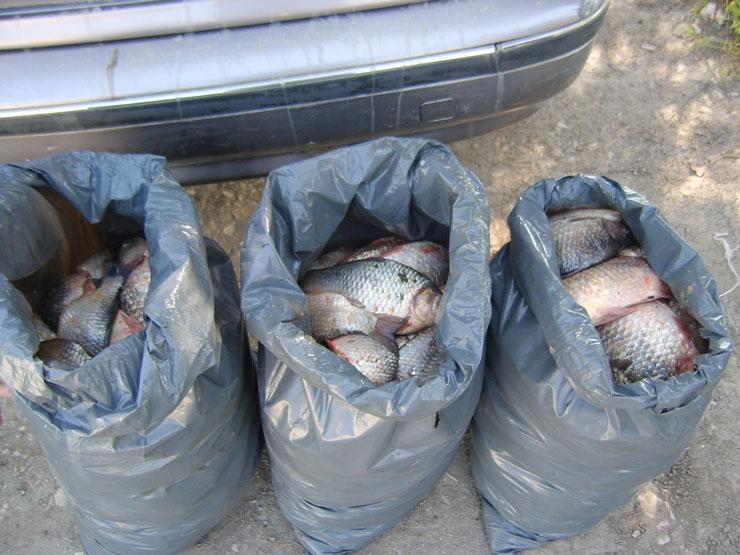 Prinşi cu sacul la pescuit