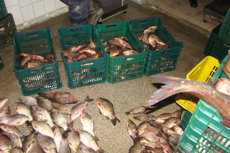 Transportau ilegal peste 300 de kilograme de peşte