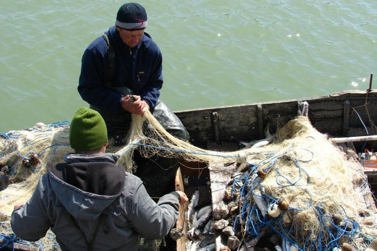 Cotele de pescuit pentru 2014 vor fi mai mici