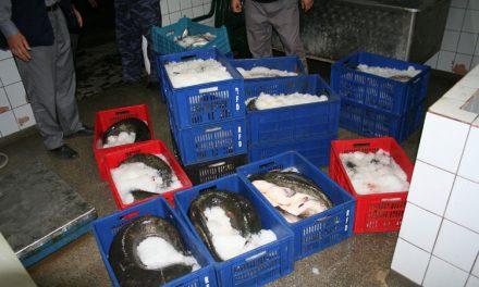 E oficial: 47 de puncte de debarcare şi centre de primă vânzare a peştelui, în judeţul Tulcea