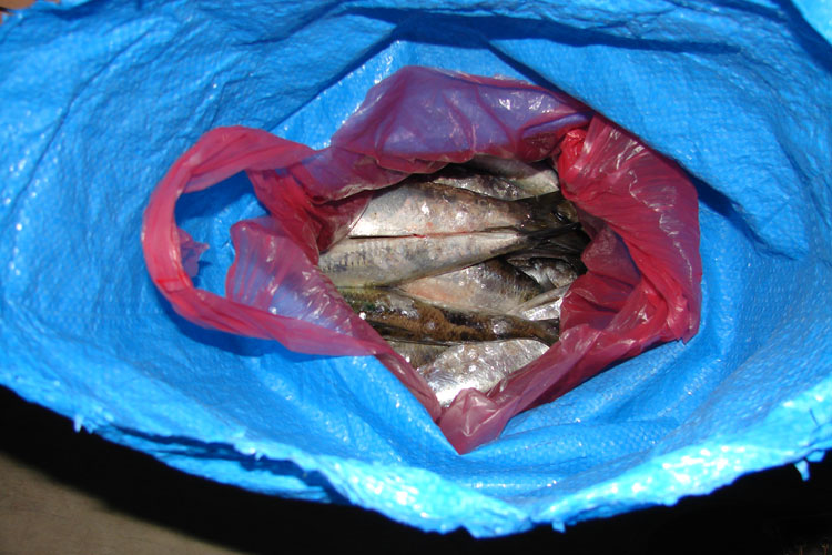 Peşte adus din deltă de un angajat la unei firme de curierat, cu documente false