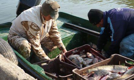 Valabilitatea permiselor de pescuit comercial, prelungită până la 1 iunie