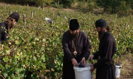 Subvenţii de zeci de mii de euro pentru agricultură cu Har Dumnezeiesc
