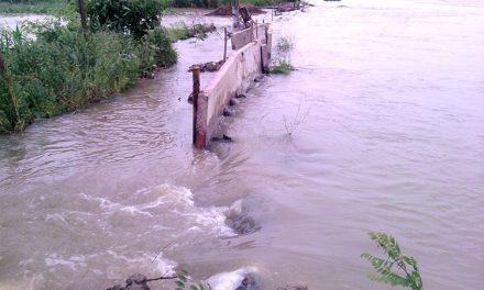 Apele umflate ale Dunării pun presiune pe dig