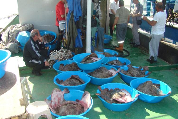 Pescador sub pavilion Turcia, cu sute de kilograme de calcan la bord interceptat de Garda de Coastă din Sulina