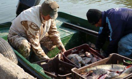 Peşte mai puţin, pentru pescarii din Deltă