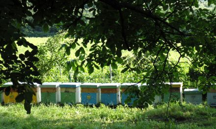 Apicultori din ţară şi de peste hotare au luat cu asalt Luncaviţa