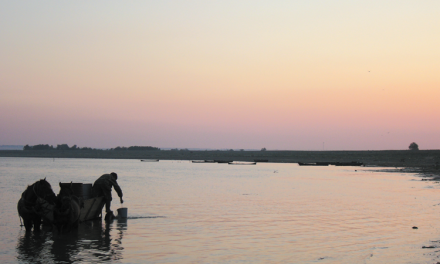 Delta Dunării ar putea avea avantaje de pe urma declarării ca zonă periferică a Europei