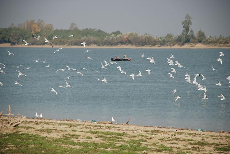 Grindu vrea în Rezervaţia Biosferei Delta Dunării
