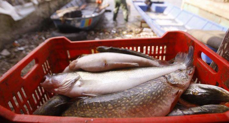 Lucrările de construire a Bursei de peşte de la Tulcea vor începe peste o lună