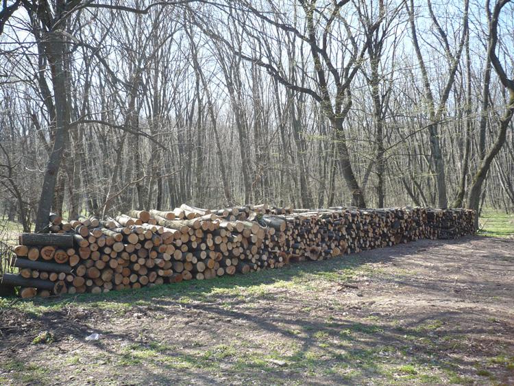 Tulcenii nu se grăbesc să-şi ia ajutorul pentru lemnele de foc