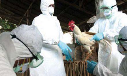 Fermele de păsări din Tulcea, controlate de veterinari