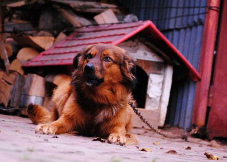 Taxa pe câine, deloc pe placul tulcenilor
