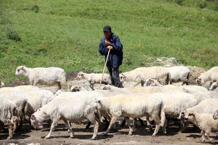 Fermierii care încasează subvenţii mai mari de 5.000 de euro ar putea pierde banii!