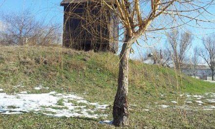 Prinşi în miezul zilei, la furat rămurele de salcie din Parcul Ciuperca