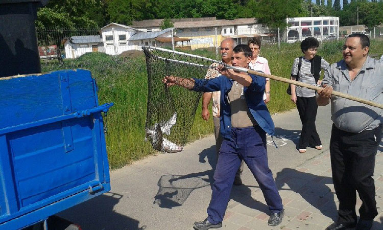 Specialiştii de la INCDDD, chemaţi să numere peştii din lacul Ciuperca