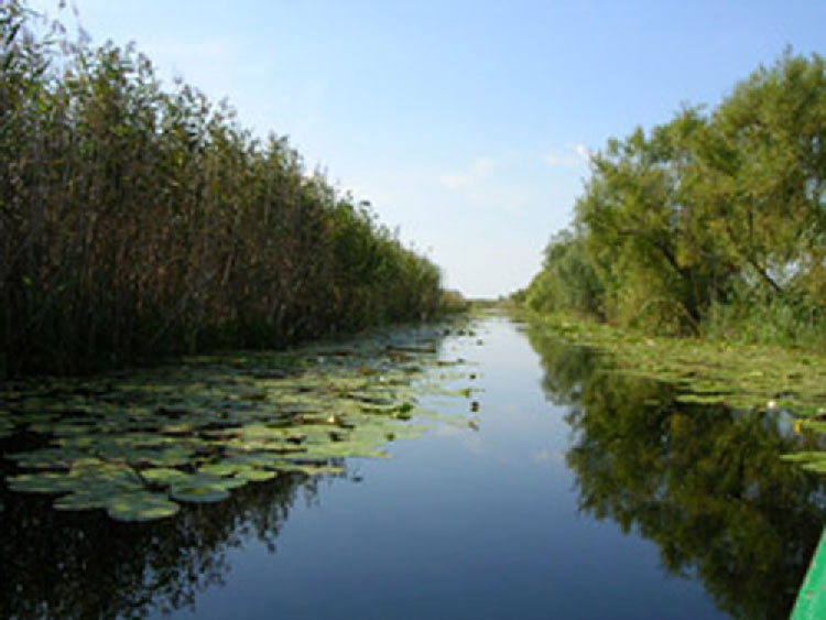 """Bunătăţi din Delta Dunării, la """"Târgul de Florii"""" organizat de Ministerul Agriculturii"""