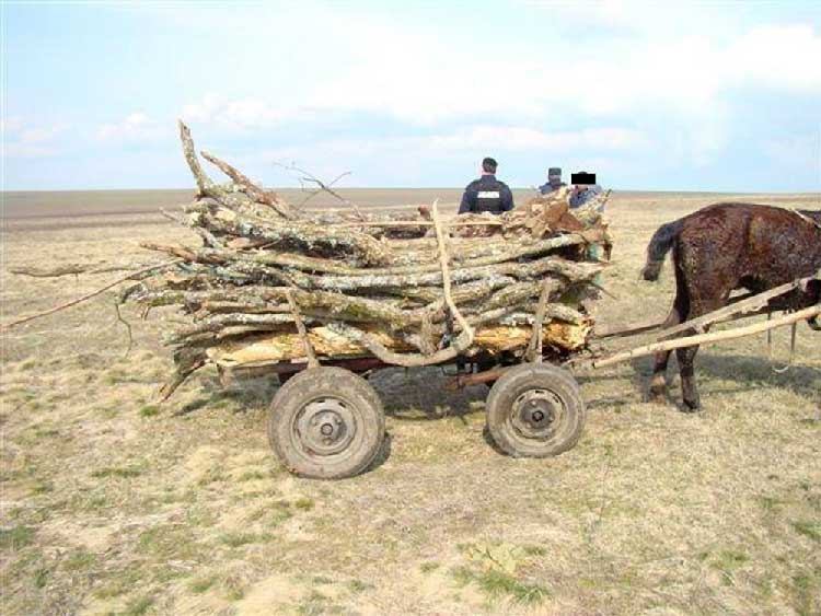 """Prinşi de jandarmi la furat de lemne din pădurea """"Ciripciu"""""""