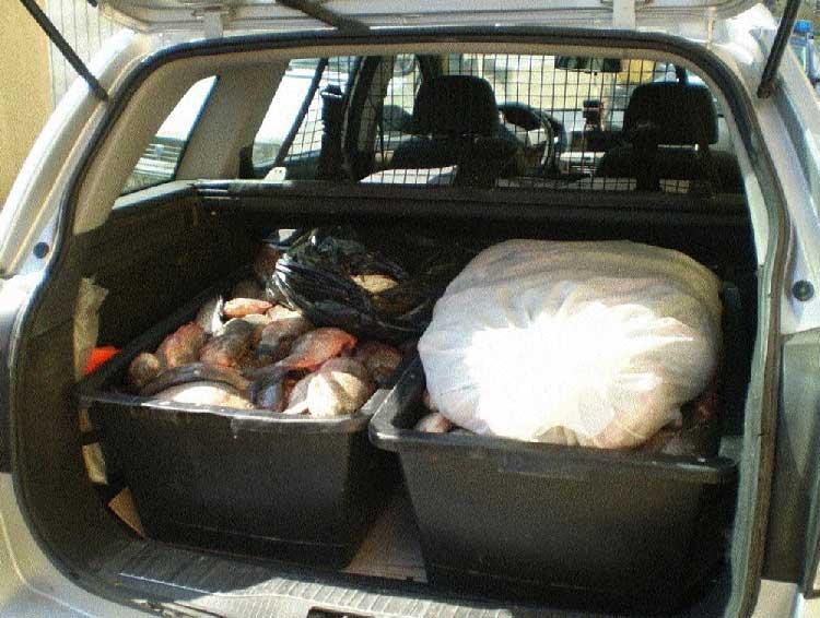 Un constănţean nu a putut prezenta documente justificative pentru aproape 160 de kilograme de peşte