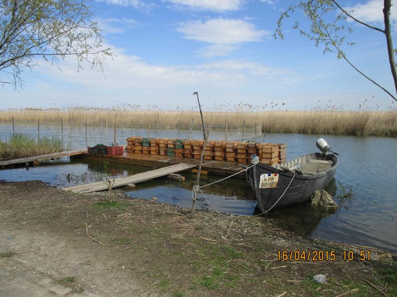 Acţiunea de repopulare a lacului Razim cu icreembrionate de şalău, la final
