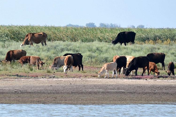Diagnostic dur pentru Delta Dunării