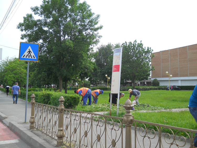 Bulbii de lalele distribuiţi gratuit de municipalitate au avut mare priză la tulceni