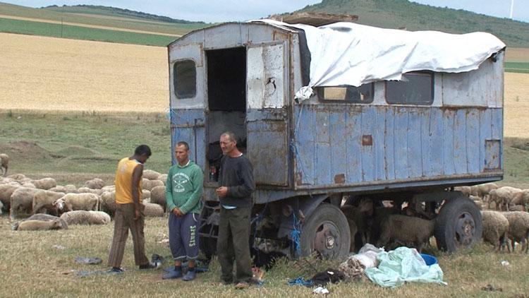 Crescător de animale din Baia, arestat pentru lipsire de libertate