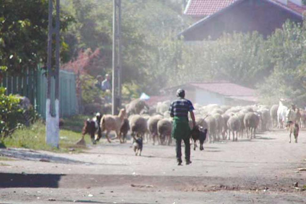 Soluţia la criza refugiaţilor, oferită de edilul comunei Baia, Nicolae Ianuş
