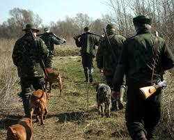 Pesta porcină africană dă dezlegare la vânătoare în Delta Dunării