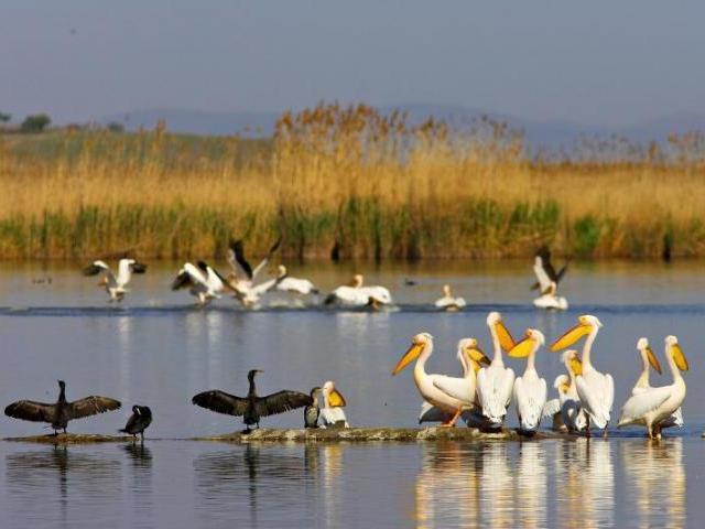 Numai să vină! Delta Dunării îi aşteaptă pe ruşi: măcar 100.000 de turişti