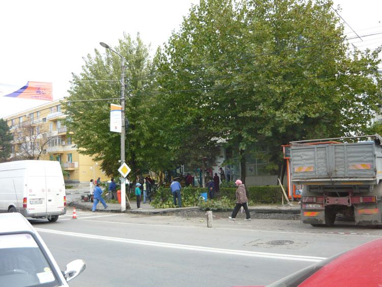 Circa 100 de copaci care stau să cadă peste trecători vor fi tăiaţi în acest an de municipalitate