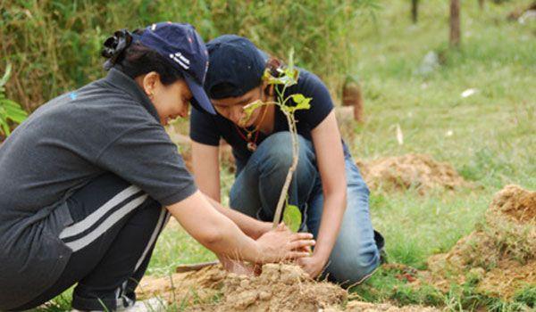 Tulcenii, invitaţi să planteze un copac în cadrul unei acţiuni regionale