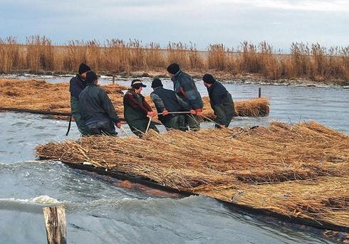 Localnicilor de pe teritoriul Rezervaţiei li se interzice recoltarea stufului
