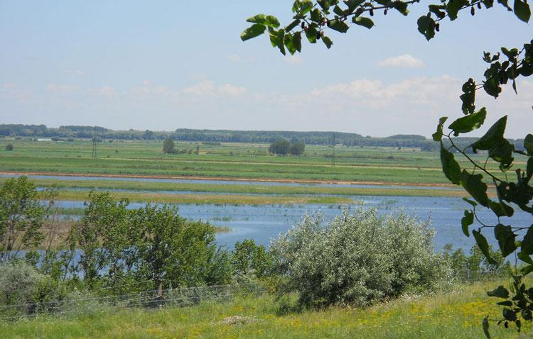 Mini-delta de la marginea municipiului, în administrarea ARBDD