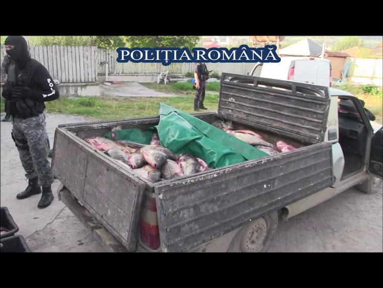 Trei firme din Babadag, cercetate de poliţişti pentru evaziune fiscală în domeniul piscicol