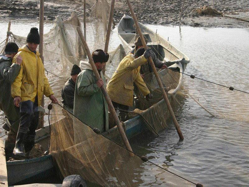 Bursa de peşte de la Tulcea, în coadă de… peşte