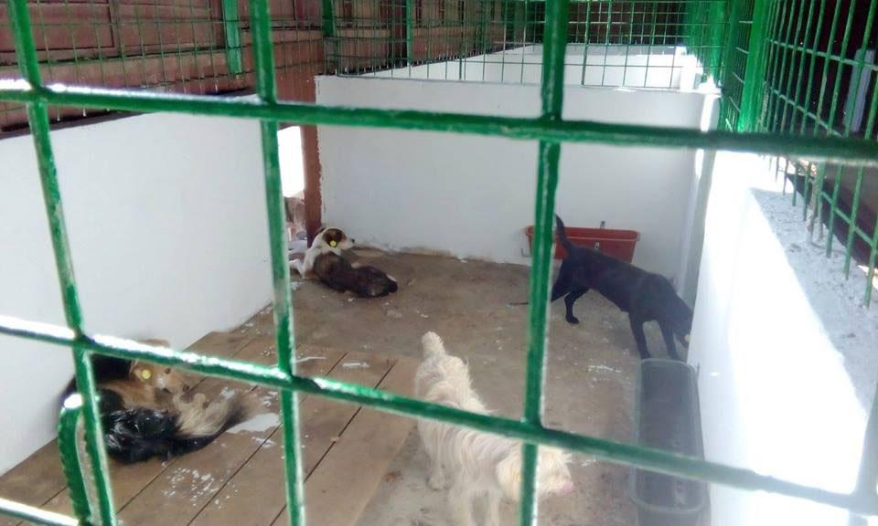 """Autorităţile locale, faţă cu animalele fără stăpân: legislaţie deficitară,  măsuri de intimidare din partea iubitorilor de patrupede şi adopţii """"de faţadă"""""""